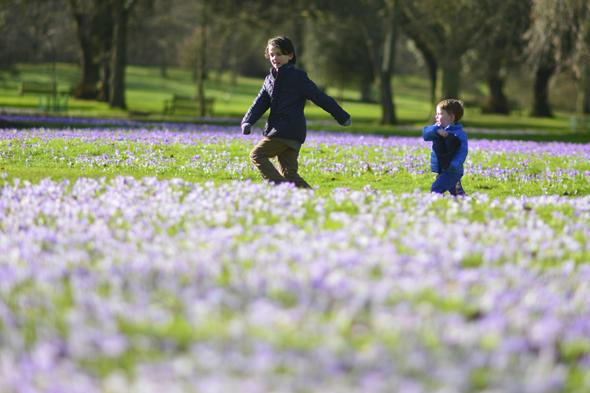 Mandatory Credit: Photo by Stephen Simpson/REX (3589579a) Jacob Simpson aged 10 and Charlie Watson aged three run next to the colourful flowers Crocuses in flower for spring in Kew Gardens, London, Britain - 21 Feb 2014