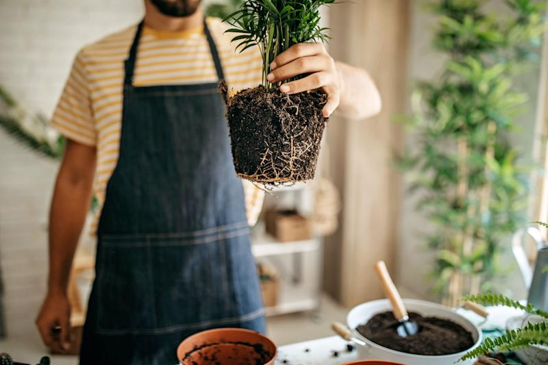 You shouldn't repot a plant right after you get it. Instead, give it a few days or weeks to acclimate to your home. (Photo: eclipse_images via Getty Images)