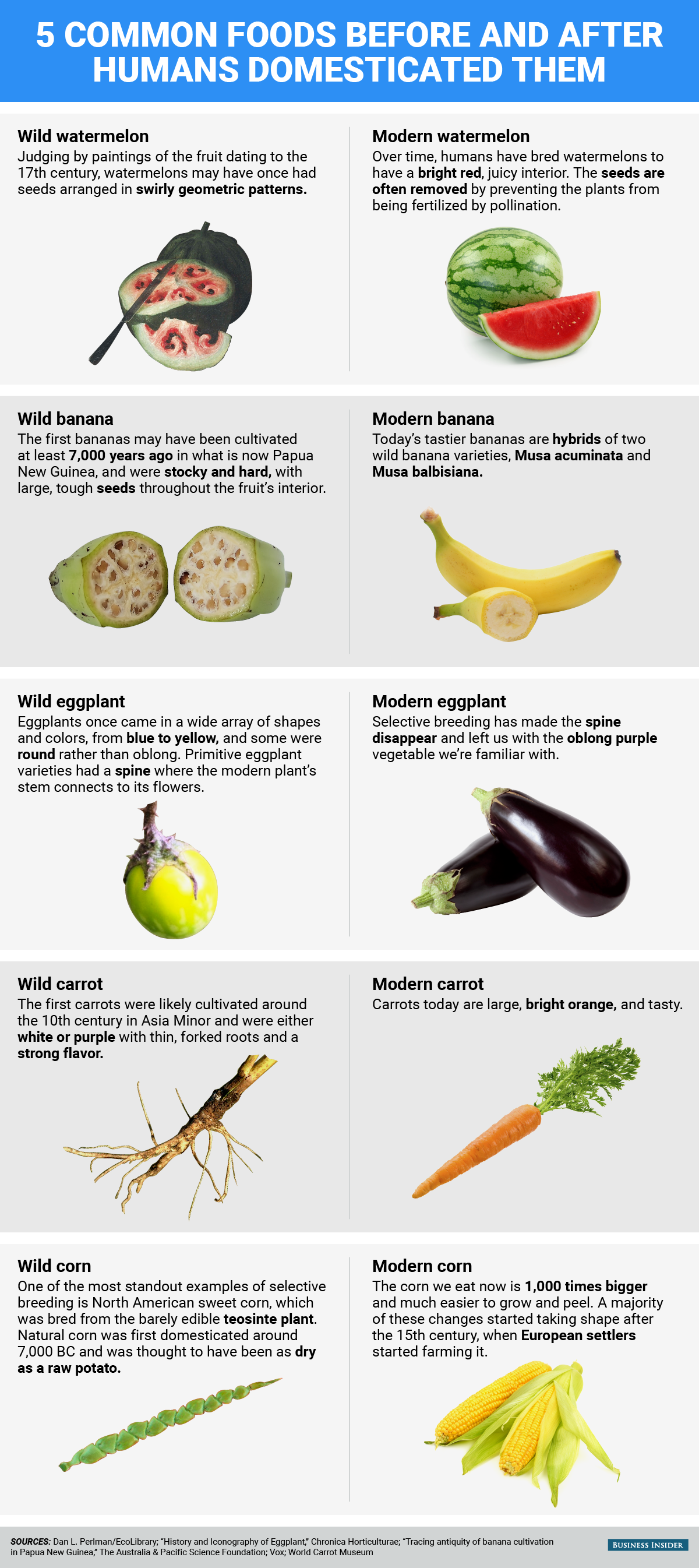 bi_graphics 5 common foods before and after humans domesticated them (1)
