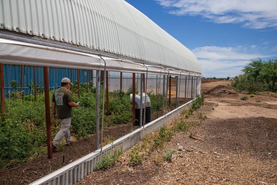 Zach Brooks, owner of the Arizona Worm Farm, walks through the greenhouse where his crew grows vegetables in south Phoenix.