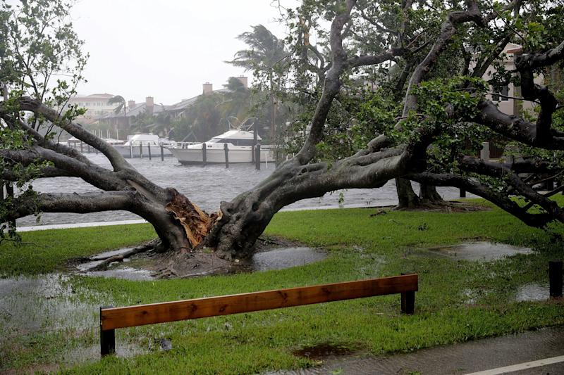 High winds split a large tree in Coral Beach.