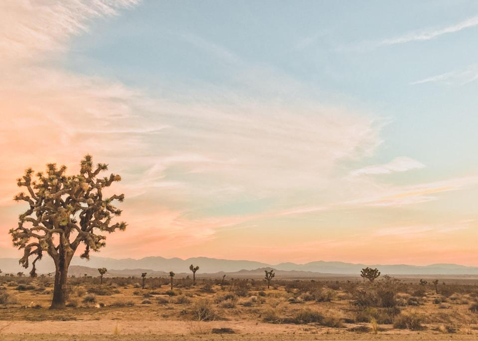 """<a href=""""https://www.cntraveler.com/activities/joshua-tree/joshua-tree-national-park?mbid=synd_yahoo_rss"""" rel=""""nofollow noopener"""" target=""""_blank"""" data-ylk=""""slk:Joshua Tree National Park"""" class=""""link rapid-noclick-resp"""">Joshua Tree National Park</a> has a powerful pull. And autumn, when the temperatures finally dip to a comfortable 75 degrees during the day and the summer crowd has moved on, is the most glorious time to fall under its dusty, juniper-scented, high desert spell. The park is the main reason to visit, of course, and there are dozens of hikes that run from paved nature trails, to hardcore out-and-back treks, to full-on bouldering. (The in-and-out three-miler Ryan Mountain Trail is a good one for views, but it can get crowded; the Panoramic Loop is roughly twice as long, but less busy.) Outside the park, no trip to Joshua Tree is complete without a visit to the <a href=""""https://www.integratron.com/"""" rel=""""nofollow noopener"""" target=""""_blank"""" data-ylk=""""slk:Integratron:"""" class=""""link rapid-noclick-resp"""">Integratron:</a> Built in the late 1950s by ufologist and """"contactee"""" George Van Tassel according to plans he received personally from visitors from the planet Venus—with funding from Howard Hughes, naturally—the Integratron was designed to time travel and add longevity to those who experienced it. Nowadays, its wood-paneled walls and acoustically perfect interiors provide a super groovy, high energy spot for a sound bath. Public sound baths aren't happening on account of COVID-19, but you can book a private bath for your party or check out one of the Integratron-hosted outdoor sound baths. Also worth a visit is the Saturday morning farmers market, <a href=""""https://visitpioneertown.com/"""" rel=""""nofollow noopener"""" target=""""_blank"""" data-ylk=""""slk:Pioneertown"""" class=""""link rapid-noclick-resp"""">Pioneertown</a>, a former film set for Western movies just northeast of the national park, and <a href=""""https://www.pappyandharriets.com/"""" rel=""""nofollow noopener"""" target=""""_blank"""" da"""