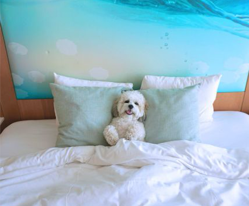 <p>The hotel's pet friendly travel program has a bunch of inclusions. Photo: Supplied/Paséa Hotel & Spa </p>