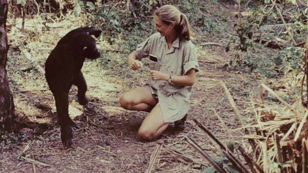 PHOTO: Jane Goodall is shown in Gombe Stream National Park, Tanzania, as she appears in the television special 'Miss Goodall and the World of Chimpanzees' originally broadcast on CBS, Dec. 22, 1965. (CBS Photo Archive via Getty Images, FILE)