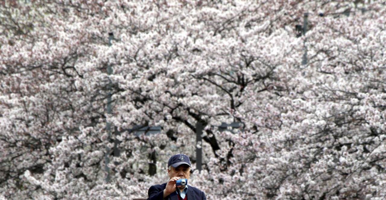 FILE - In this April 3, 2010 file photo, a man takes pictures of cherry blossoms along the Oka River in Yokohama, near Tokyo. The cherry trees will blossom soon in Japan. In this time of national grieving, the cherry blossoms will bring home the awareness of hakanasa with a strange kind of force _ one that doesn't strike but sinks into the soul like heat from a hot spring or fire from a sake bottle, to become a sight that brings sorrow and solace in equal measure. The fragility of technologically-advanced Japan was exposed in the most terrifying way in the earthquake and tsunami that devastated the northeast.