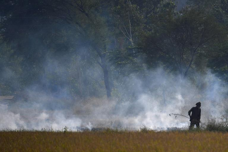 Teams in states around Delhi are hunting the illegal stubble burners even driving around country roads at night when most fires are started