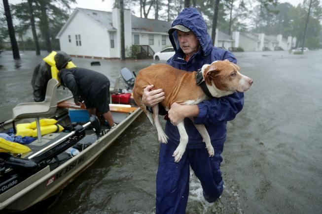 A volunteer wades through flood waters to rescue a dog.