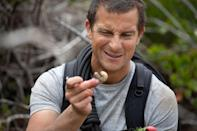 """<p><strong>Netflix's Description:</strong> """"When wild animals escape from a sanctuary, Bear Grylls - and you - must pursue them and secure their protective habitat. An interactive special.""""</p> <p><a href=""""https://www.netflix.com/title/81205737"""" class=""""link rapid-noclick-resp"""" rel=""""nofollow noopener"""" target=""""_blank"""" data-ylk=""""slk:Stream Animals on the Loose: A You vs. Wild Movie on Netflix now!"""">Stream <b>Animals on the Loose: A You vs. Wild Movie</b> on Netflix now!</a></p>"""