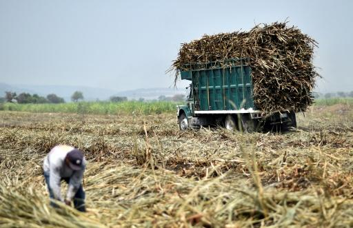 Mexico agrees to terms in sugar pact despite US producer resistance