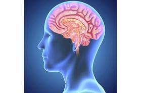 How does our brain influence our behaviour?