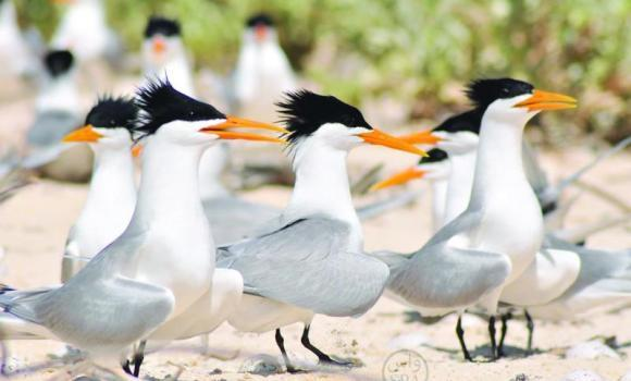 Government extends ban on hunting of migratory birds