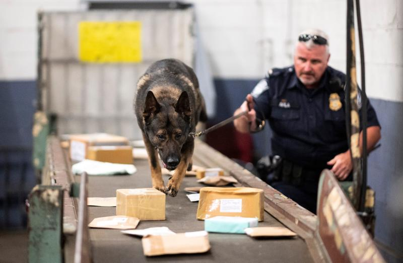 An officer from the Customs and Border Protection, Trade and Cargo Division works with a dog to check parcels at John F. Kennedy Airport's US Postal Service facility on June 24, 2019 in New York. - In a windowless hangar at New York's JFK airport, dozens of law enforcement officers sift through packages, looking for fentanyl -- a drug that is killing Americans every day. The US Postal Service facility has become one of multiple fronts in the United States' war on opioid addiction, which kills tens of thousands of people every year and ravages communities. (Photo by Johannes EISELE / AFP) (Photo by JOHANNES EISELE/AFP via Getty Images)