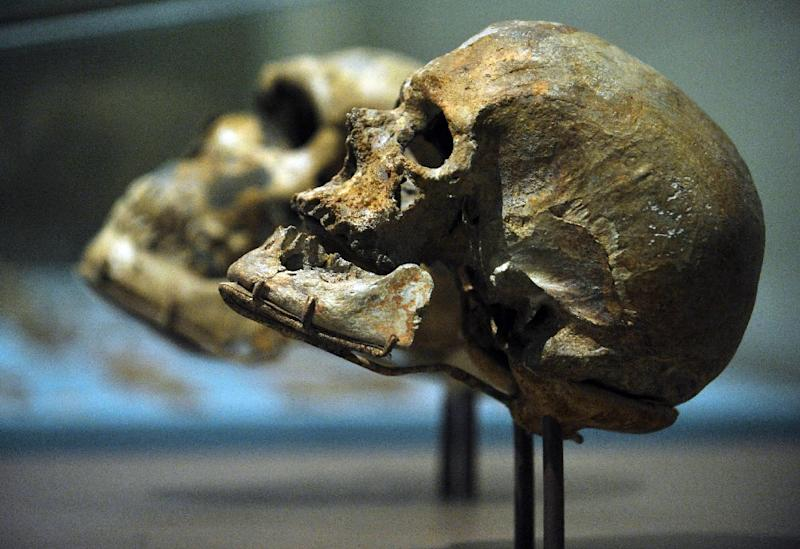 The skull of the Homo Sapiens Cro-Magnon 1 (R), and the Homo Neanderthalensis La Ferrassie 1 seen on display at the Smithsonian National Museum of Natural History in Washington, DC on March 17, 2010