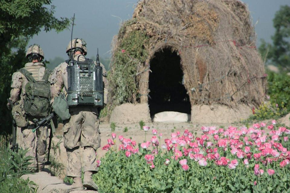 Canadian soldiers walk past a patch of pink poppies.