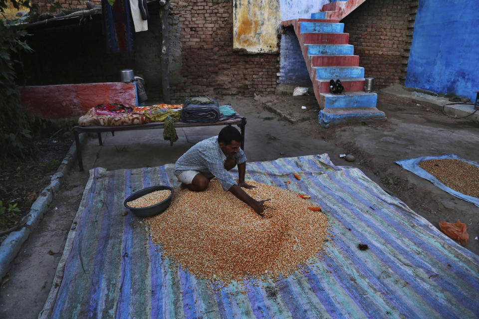 An Indian farmer dries his corn crop on the outskirts of Jammu, India, Sunday, Sept. 20, 2020. Amid an uproar in Parliament, Indian lawmakers on Sunday approved a pair of controversial agriculture bills that the government says will boost growth in the farming sector through private investments. (AP Photo/Channi Anand)