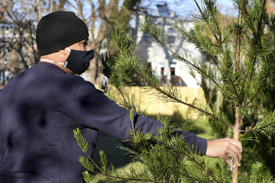 Rei Alvarez, of Richmond, picks out a tree at Frank Pichel's (not pictured) tree lot, Sunday, Dec. 6, 2020, in Richmond, Va. A Virginia man has found a way to use Charlie Brown-style Christmas trees to benefit a middle school that provides scholarships for students from an impoverished area. (AP Photo/Will Newton)