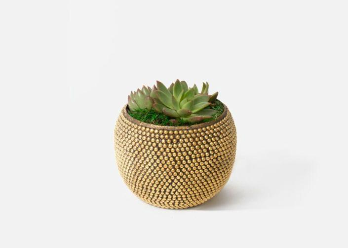 """<p><strong>Urban Stem</strong></p><p>urbanstems.com</p><p><strong>$55.00</strong></p><p><a href=""""https://go.redirectingat.com?id=74968X1596630&url=https%3A%2F%2Furbanstems.com%2Fproducts%2Fplants%2Fthe-winona%2FNF-K-00001.html&sref=https%3A%2F%2Fwww.cosmopolitan.com%2Flifestyle%2Fg37168860%2Fbest-plants-for-balcony%2F"""" rel=""""nofollow noopener"""" target=""""_blank"""" data-ylk=""""slk:Shop Now"""" class=""""link rapid-noclick-resp"""">Shop Now</a></p><p>The planter alone is just too stunning to pass up. It'll totally beautify your balcony instantly! And we can't forget the fact that succulents are more than easy to care for.</p>"""