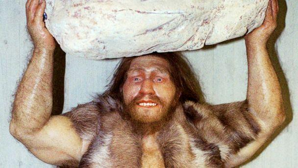 PHOTO: FILE - A replica of a Neanderthal man is displayed at the Neanderthal museum in Mettmann, western Germany, Oct. 1996. (Heinz Ducklau/AP, FILE)