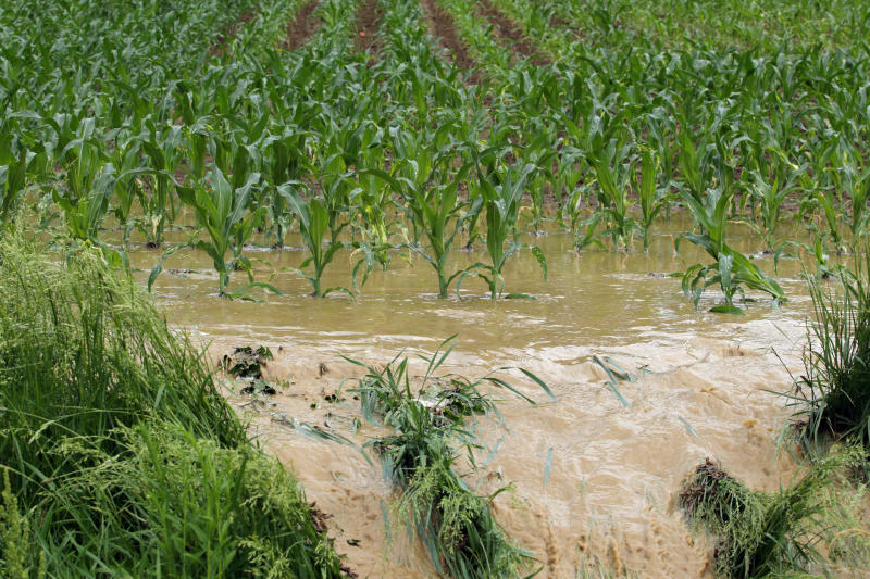 Flooded cornfield with muddy water spilling over into a ditch.