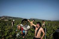 """The head of the Burgundy Wine Bureau says yields are """"historically low"""" after the region was hit by cold, rain and severe drought -- conditions which are becoming ever more common (AFP/JEFF PACHOUD)"""