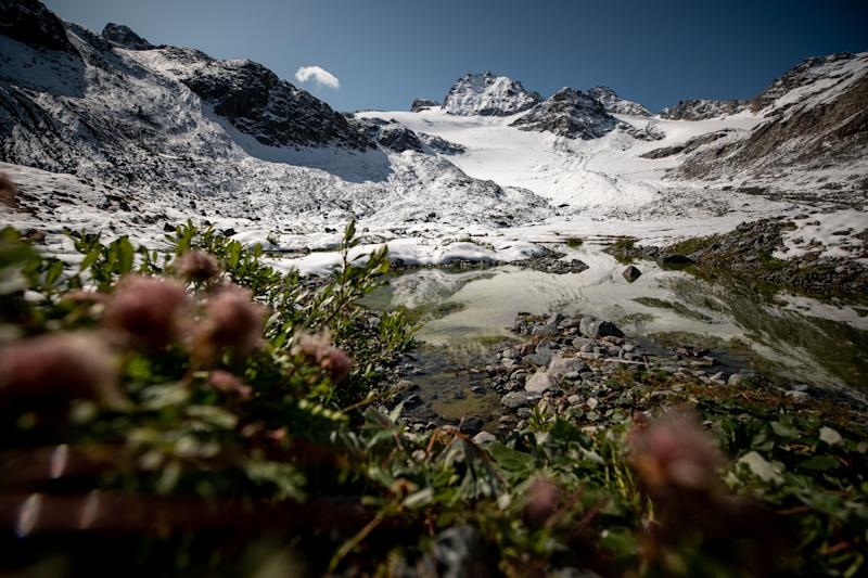 Plants grow near a lake in front of Jamtalferner glacier near Galtuer, Austria. (Photo: Lisi Niesner/Reuters)