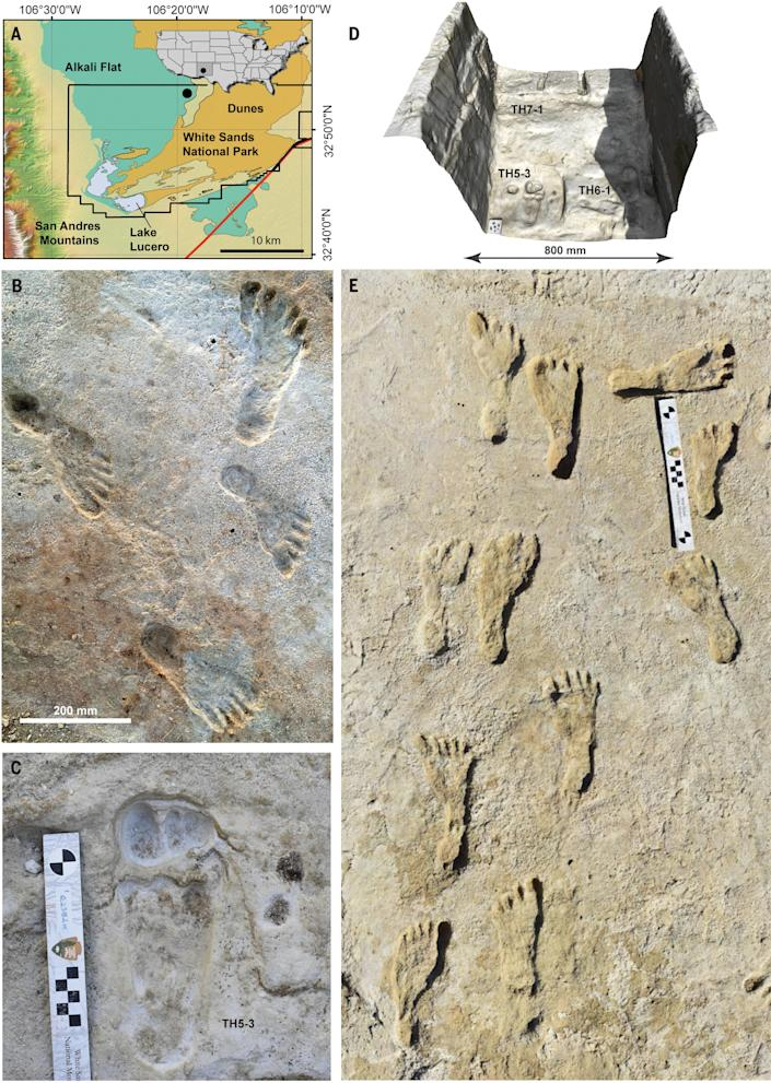 Human trackways on TH4. / Credit: Science
