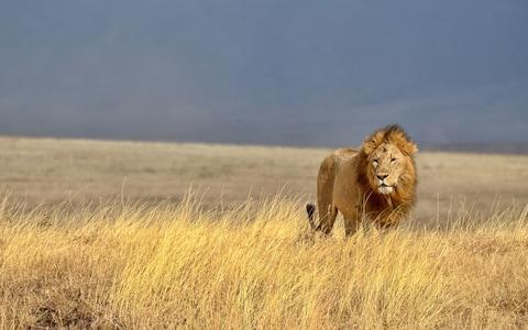 The country is also a sanctuary for big cats like this lion - Credit: AP/FOTOLIA