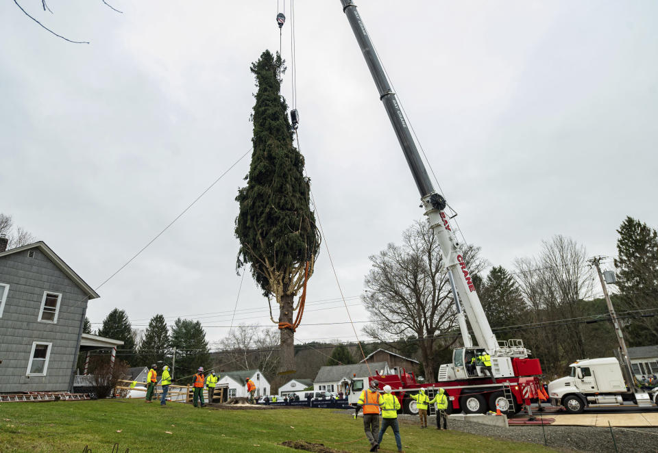 This year's Rockefeller Center Christmas tree, a 75-foot tall, 11-ton Norway Spruce, is craned onto a flatbed truck, Thursday, Nov. 12, 2020, in Oneonta, N.Y. The tree will be brought into New York City and erected at Rockefeller Center on Saturday, Nov. 14. (Diane Bondareff/AP Images for Tishman Speyer)