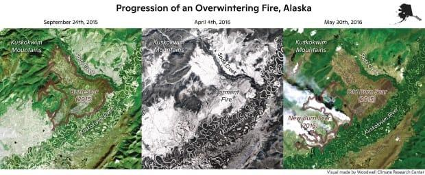 These composite satellite images from Landsat show three stages of an overwintering fire in Alaska: a seemingly extinguished fire at the end of the fire season in 2015, left, a snow-covered fire scar during winter, middle, and a re-emerging zombie fire during the spring of 2016, right.