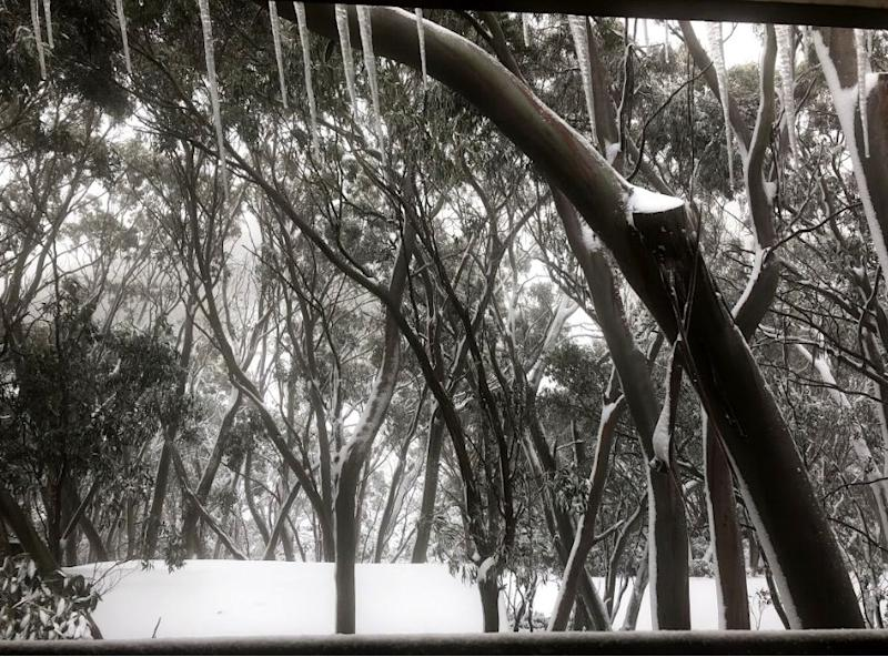 Mt Baw Baw was a picture of winter on Monday. Source: Supplied