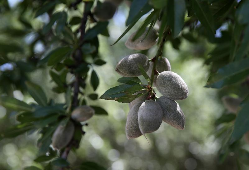 India, which Sunday imposed higher tariffs on 28 items imported from the US, is the number two market of California almonds and Washington apples