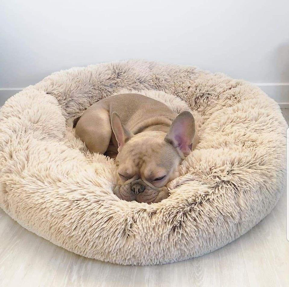 """<p><strong>(32)</strong></p><p>shopluckypaws.com</p><p><strong>$60.00</strong></p><p><a href=""""https://shopluckypaws.com/products/calmingbed?variant=30208276594767&gclid=CjwKCAjwsan5BRAOEiwALzomXxm9fLr2DxANV6WXs-SlaXffDzRAIRiVTm4sgOeyLQP46vY043Mm3RoC7FYQAvD_BwE"""" rel=""""nofollow noopener"""" target=""""_blank"""" data-ylk=""""slk:Shop Now"""" class=""""link rapid-noclick-resp"""">Shop Now</a></p><p>The Pooch Pouch is all about creating a calm, tranquil space for your dog to rest. The raised rim creates a sense of security and the super soft filling is easy on your pup's muscles and joints. </p>"""