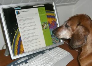Dog at the computer