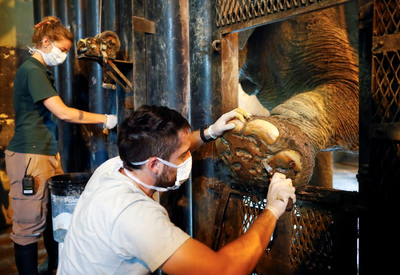 Veterinarian disinfects the foot of 54-year-old Asian elephant Mara in her enclosure at the former city zoo now known as Ecopark in Buenos Aires