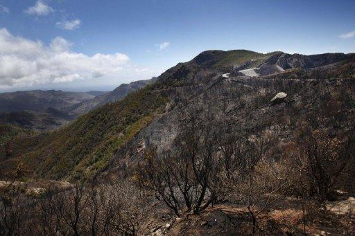 Burnt trees remain after a wildfire swept through the Garajonay national park on the island of La Gomera