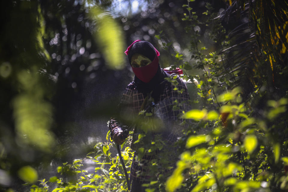 A woman sprays pesticide at a palm oil plantation in Sumatra, Indonesia, Sept. 8, 2018. Workers often cannot get medical care or access to clean water, sometimes relying on collecting rain runoff to wash the residue from their bodies after spraying dangerous chemicals or scattering fertilizer. (AP Photo/Binsar Bakkara)