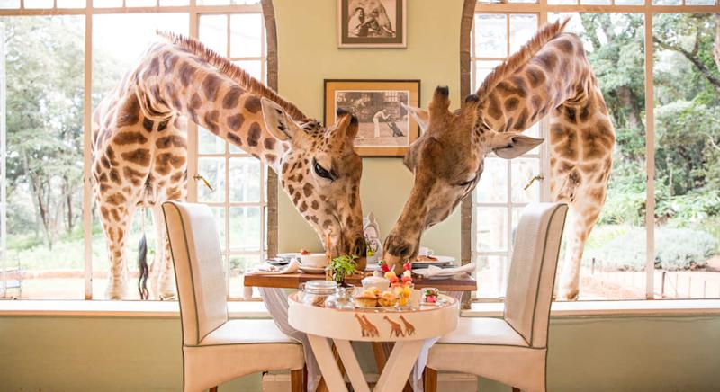 From having breakfast with giraffes to sleeping in a hotel out of ice, these are the hotels to add to your bucket list in 2020. [Photo: Giraffe Manor]