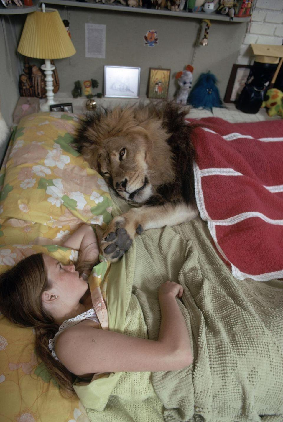 <p>Child actress Melanie Griffith shares her bed with her family pet, Neil the Lion, in 1971, after her mother, Tippi Hedren, became a lion conservationist in 1969. </p>