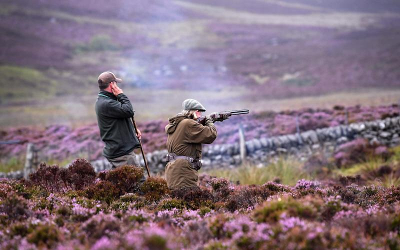 Shooting on the moors in Scotland - Getty