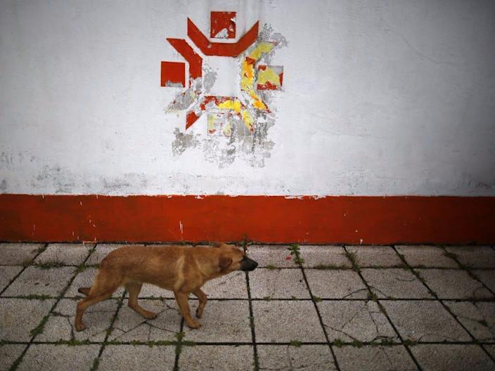 a dog walks past the kosovo stadium where the opening ceremonies took place