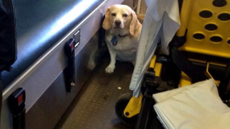 Dog Hitches On to Ambulance Driving His Owner to Hospital