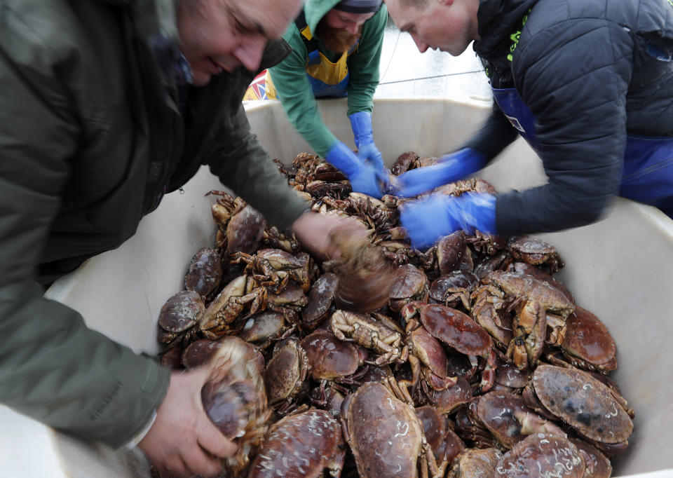 FILE - In this Monday, Nov. 11, 2019 file photo, fishermen arrange crabs after their boat returned from a fishing trip to the harbour in Hartlepool, England. British fishing communities were among the strongest supporters of Brexit. But now some say they face ruin because of new red tape imposed by Britain's departure from the European Union. One seafood firm has threatened to dump rotting crustaceans on the government's doorstep if the situation doesn't improve within days. (AP Photo/Frank Augstein, File)