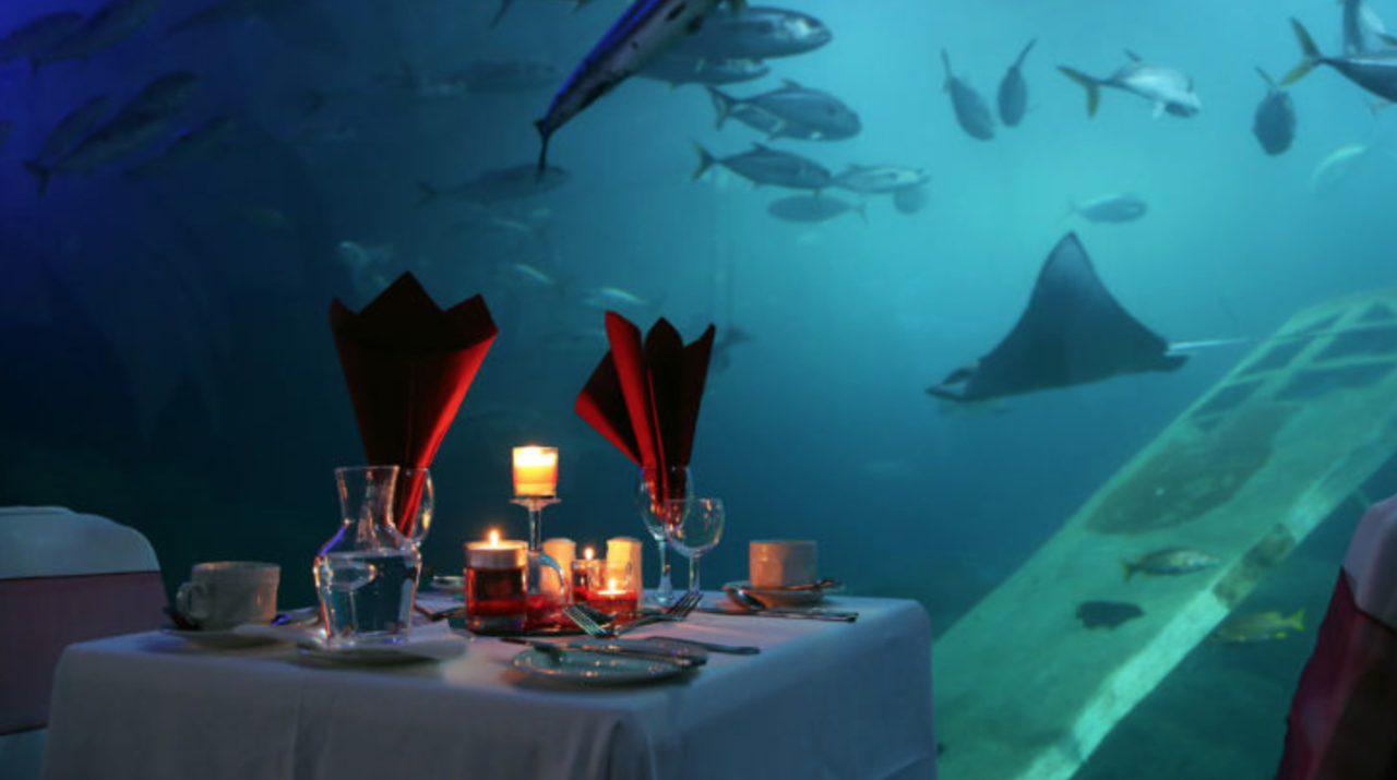 <p>Show your other half how deep your love truly is – by treating them to a subaquatic slap-up meal. The UK's largest tank – in the National Marine Aquarium – will host its first ever Valentine's dinner, where you'll tuck into a scrumptious three-course meal in the company of sharks and rays. From £50 per person, including a glass of champagne, a three-course set menu and bottle of wine on February 14. <em>[Photo: national-aquarium.co.uk]</em> </p>