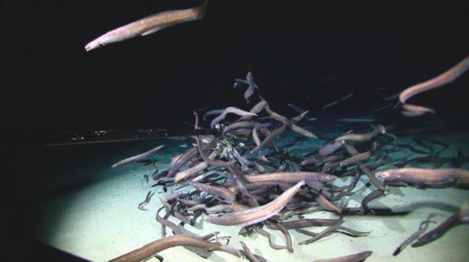 'Record' number of fish found in the undersea abyss