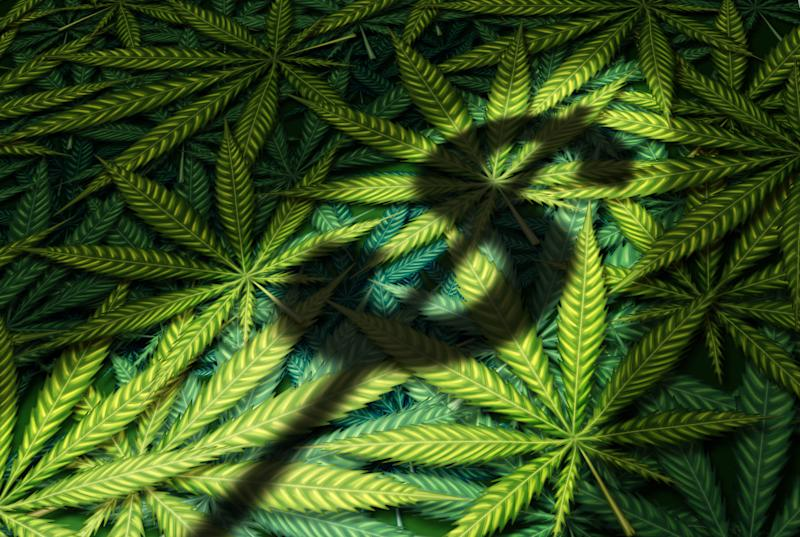 Shadow of a dollar sign on top of a pile of marijuana leaves