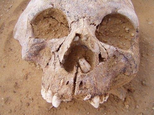 """<span class=""""caption"""">Neolithic skull.</span> <span class=""""attribution""""><span class=""""license"""">Author provided</span></span>"""