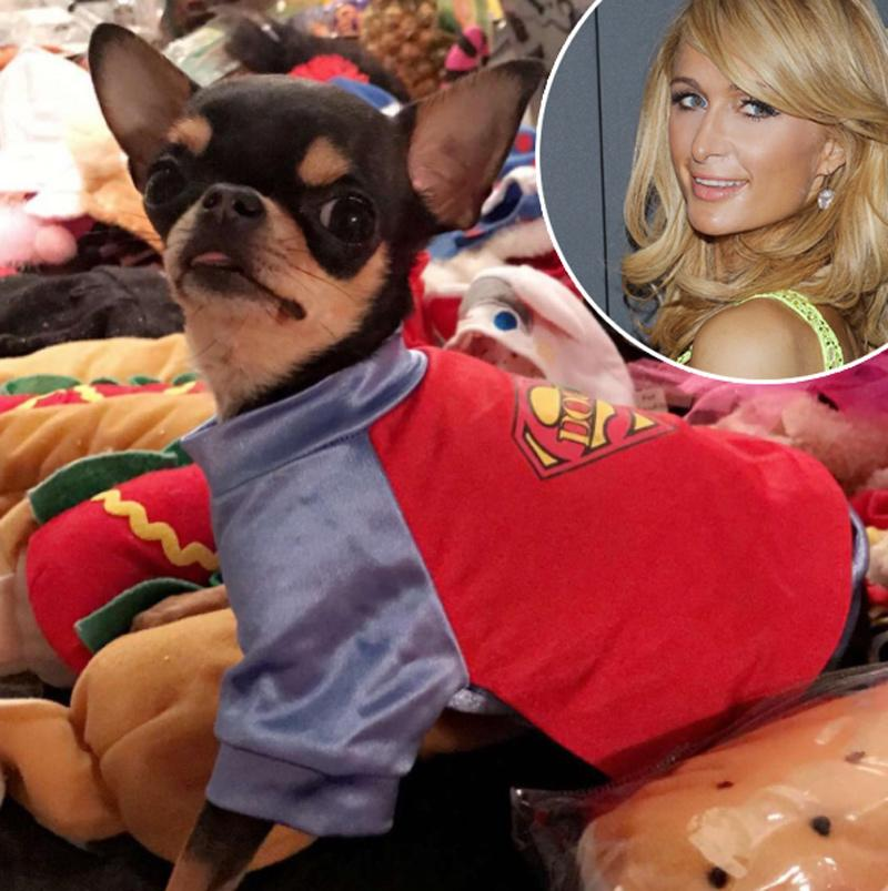 "<p>She also showed off this too-cute <a rel=""nofollow"" href=""https://www.instagram.com/p/Bau7GzHn0-1/?hl=en&taken-by=parishilton"">SuperPuppy</a>. She captioned it, ""Ready for Halloween b*****s!"" (Photo: Instagram/Paris Hilton; Getty Images) </p>"