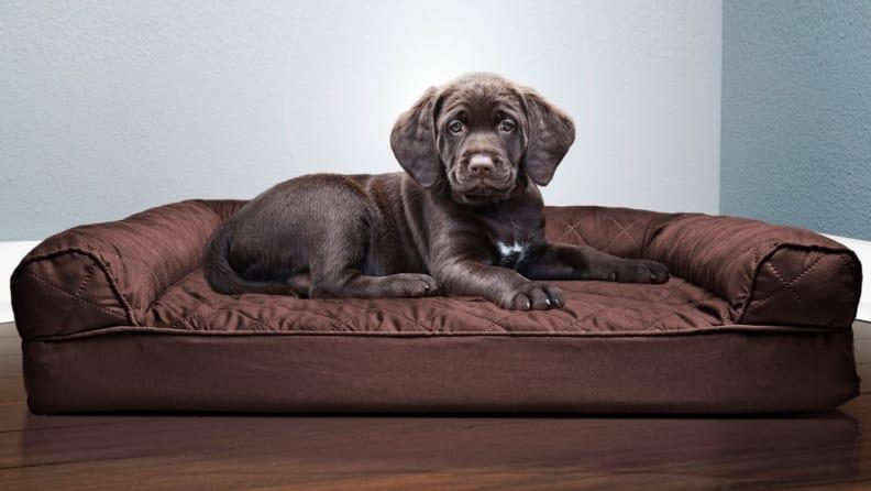 Your pooch needs just as much comfort as you do.