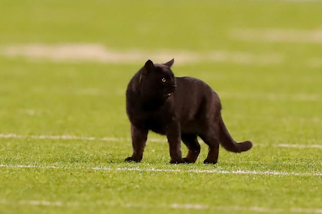 The cat interrupted the match in the second quarter. (Photo by Rich Graes fourthsle/Icon Sportswire via Getty Images)
