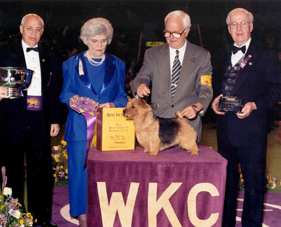 """<p>Rocki, a Norwich terrier, must have been barking along to """"Eye of the Tiger"""" while training for this competition—and it paid off!</p>"""